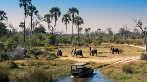 Herd-of-Elephants-walking-while-guests-cross-channel-on-a-Safari-Game-Drive-in-Botswana-1600x900